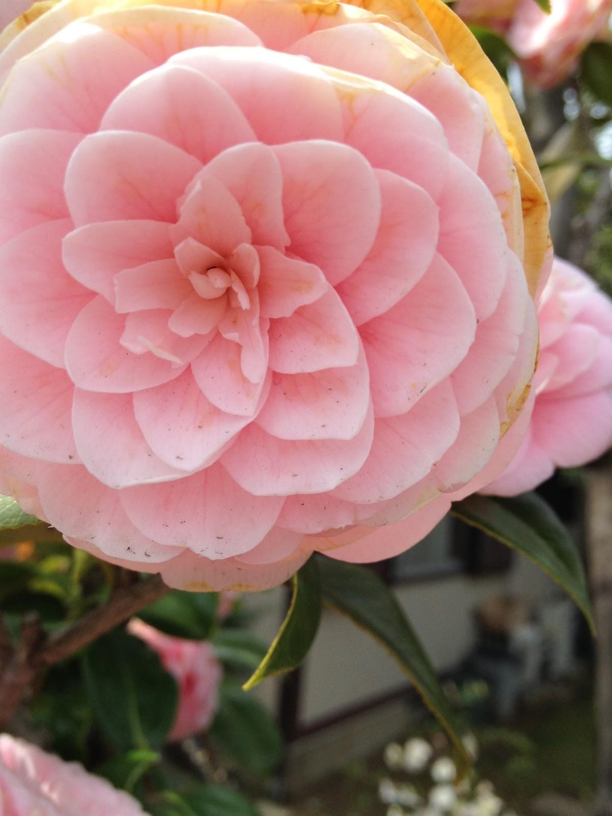 Marketing Japan Beautiful Flowers In Japans Springtime