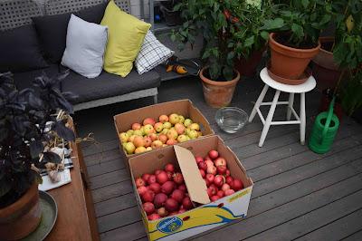 Egna äpplen