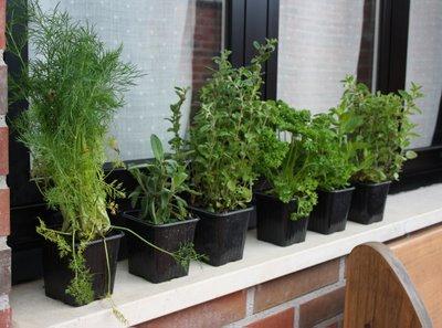 Las hierbas aromaticas for Plantas aromaticas en macetas