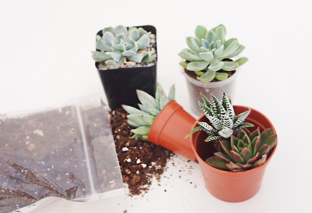 Plant plotting succulents {Home Decor DIY}