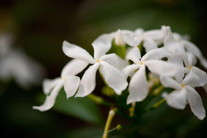 1a36da378d4e Benzyl Alcohol – Preserving With Plants