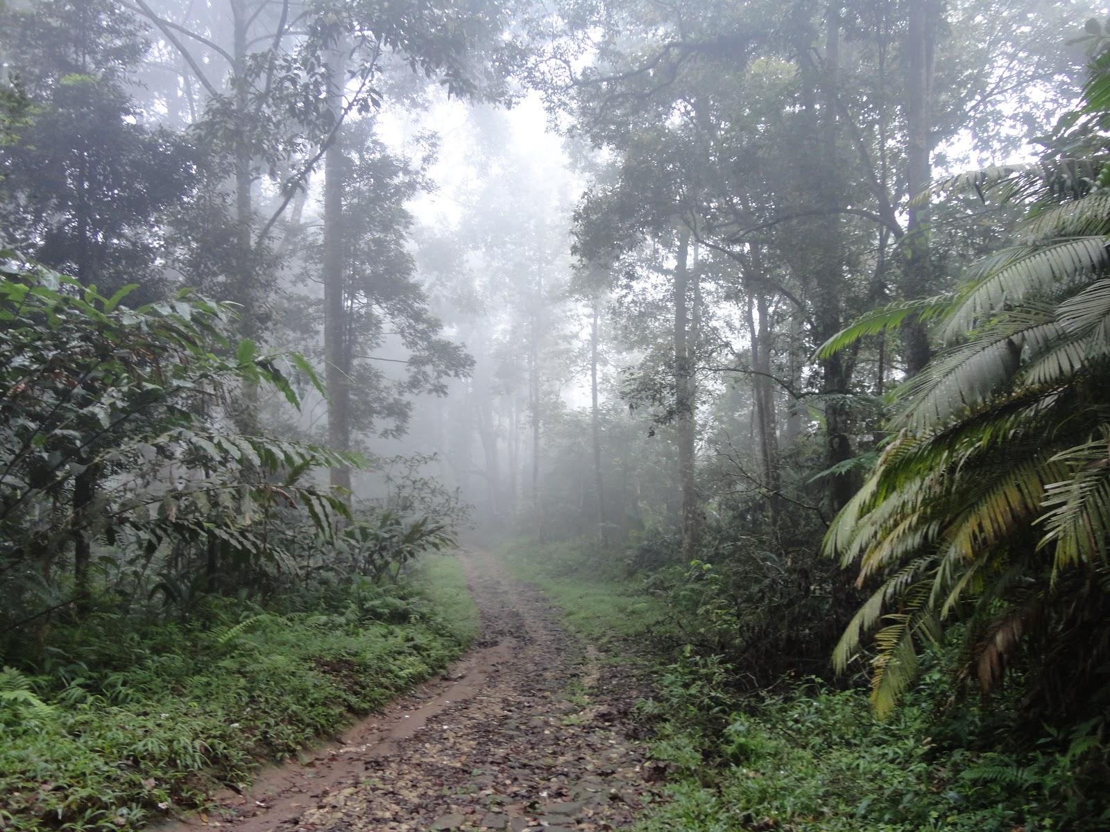 Klasifikasi Tanaman Berdasarkan Iklim Junghuhn | Media
