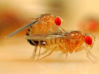 lalat-jantan-dan-betina.jpg