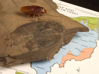 Fósil cucaracha prehistórica