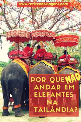 porque não andar em elefante na tailândia