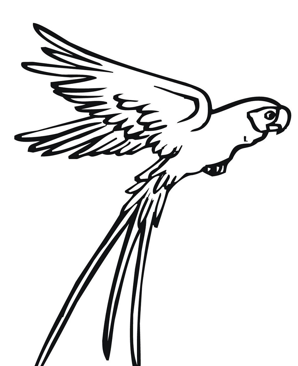 Sketsa Gambar Burung Hantu Merak Garuda Elang