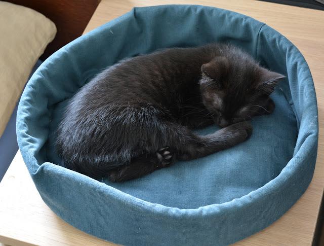 [Nähen] Katzenbetten