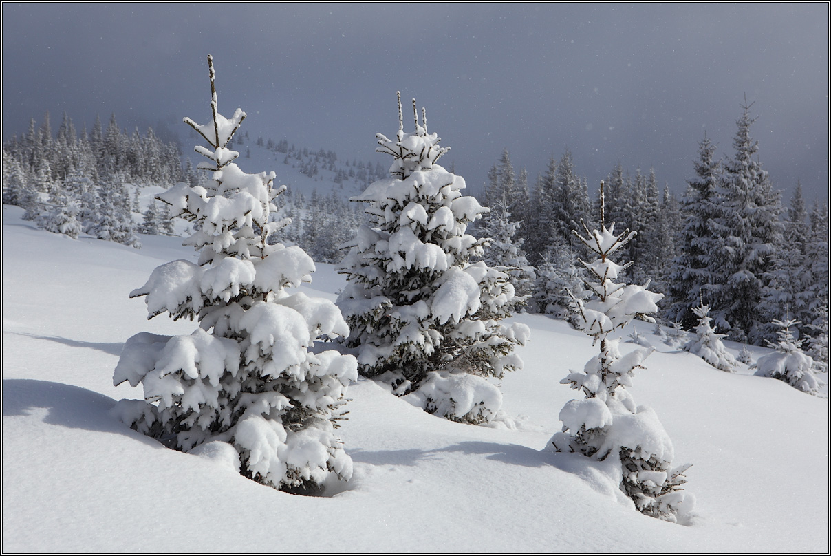 картинка белый снег пушистый вид