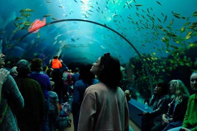 Best Aquarium in the USA: Georgia Aquarium