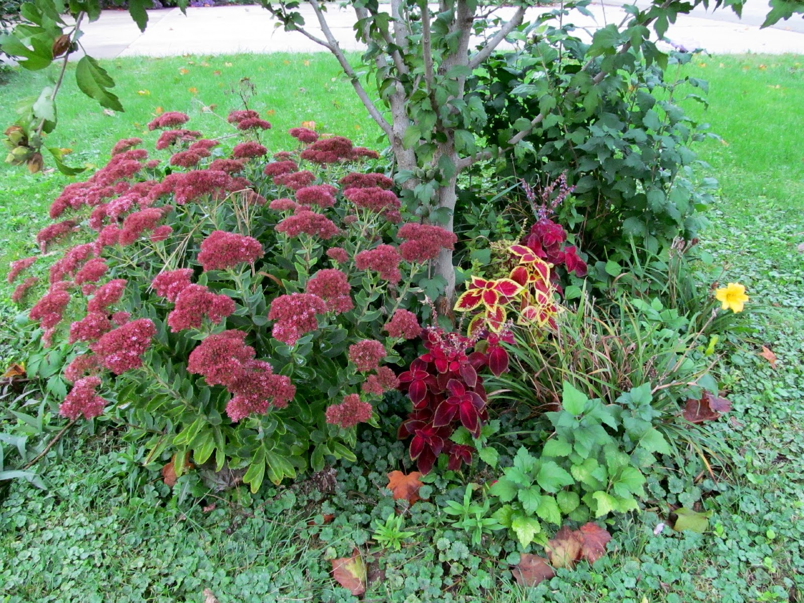 Exuberant Color Blocks And Flowers