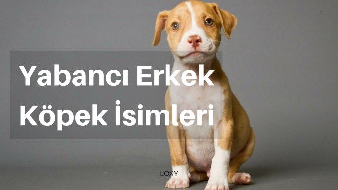 yabancı erkek Köpek İsimleri