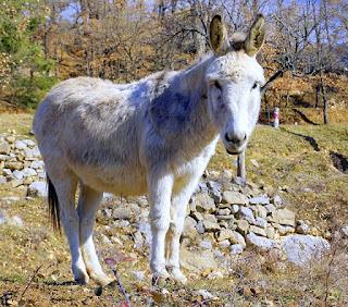 hewan binatang keledai