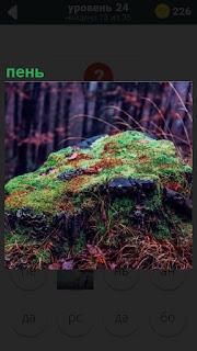 В лесу трухлявый пень весь покрыт зеленым мхом