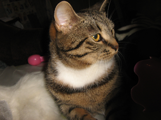 Кошка сидящая на диване