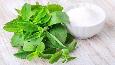 stevia bitki şekeri
