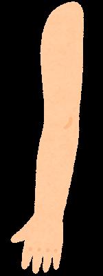 腕のイラスト(外側)