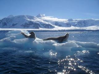 краткая характеристика Южного океана