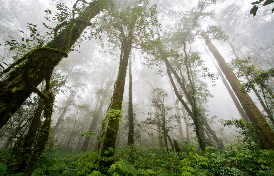 the disappearing rainforests essay