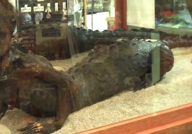 Μουσείο Των ΗΠΑ Φιλοξενεί... Ερπετοειδές Με Ανθρώπινο Πρόσωπο Και Σώμα Κροκόδειλου - Pics