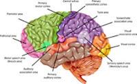 Vitamine-care-imbunatatesc-concentrarea-si-memoria