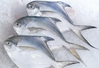 Ikan Bawal Putih.