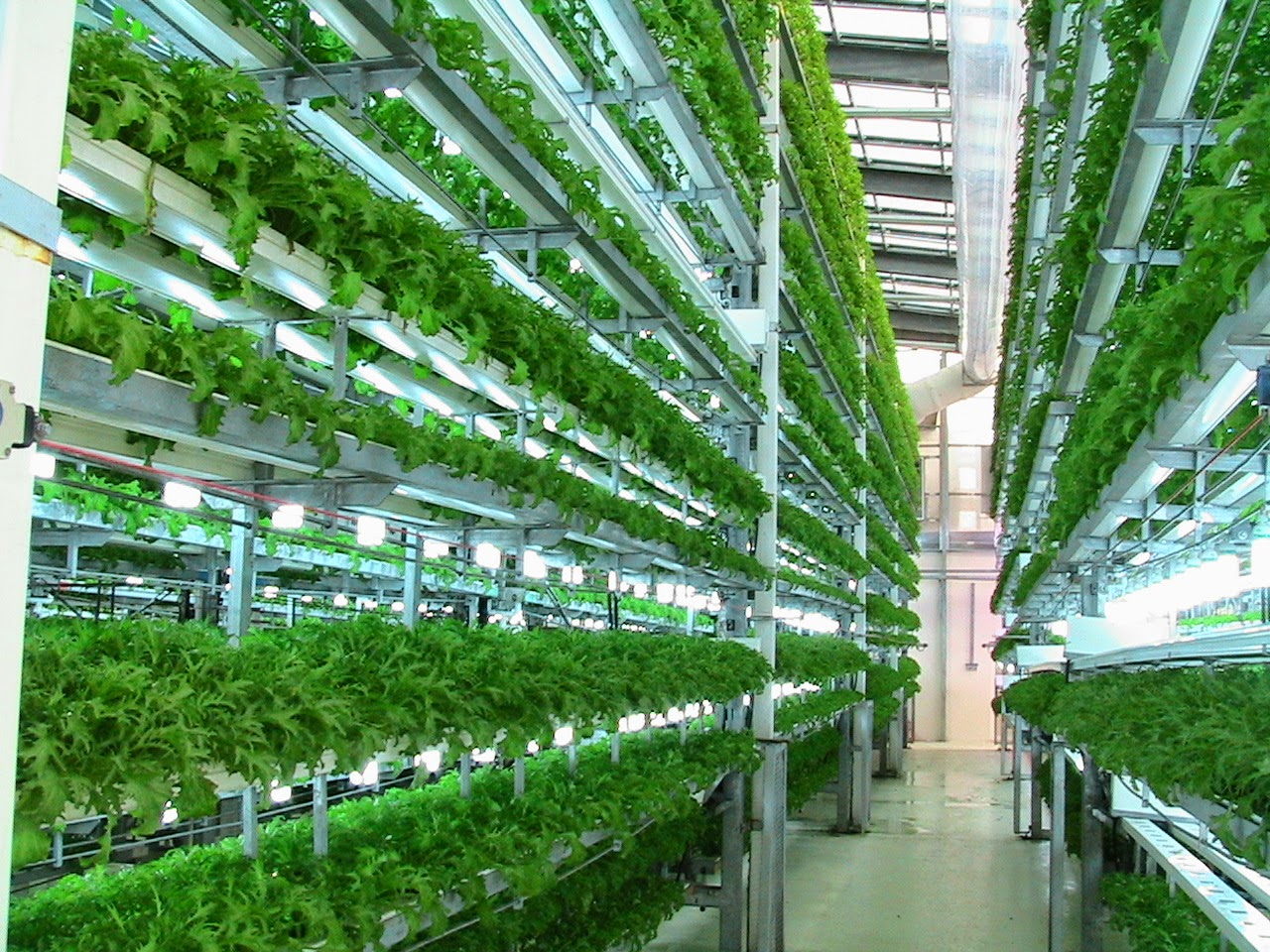 Aeroponics Cultivation Consultancy