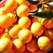http://plantasmedicinalesatusalud.blogspot.com.ar/2014/12/naranjo.html