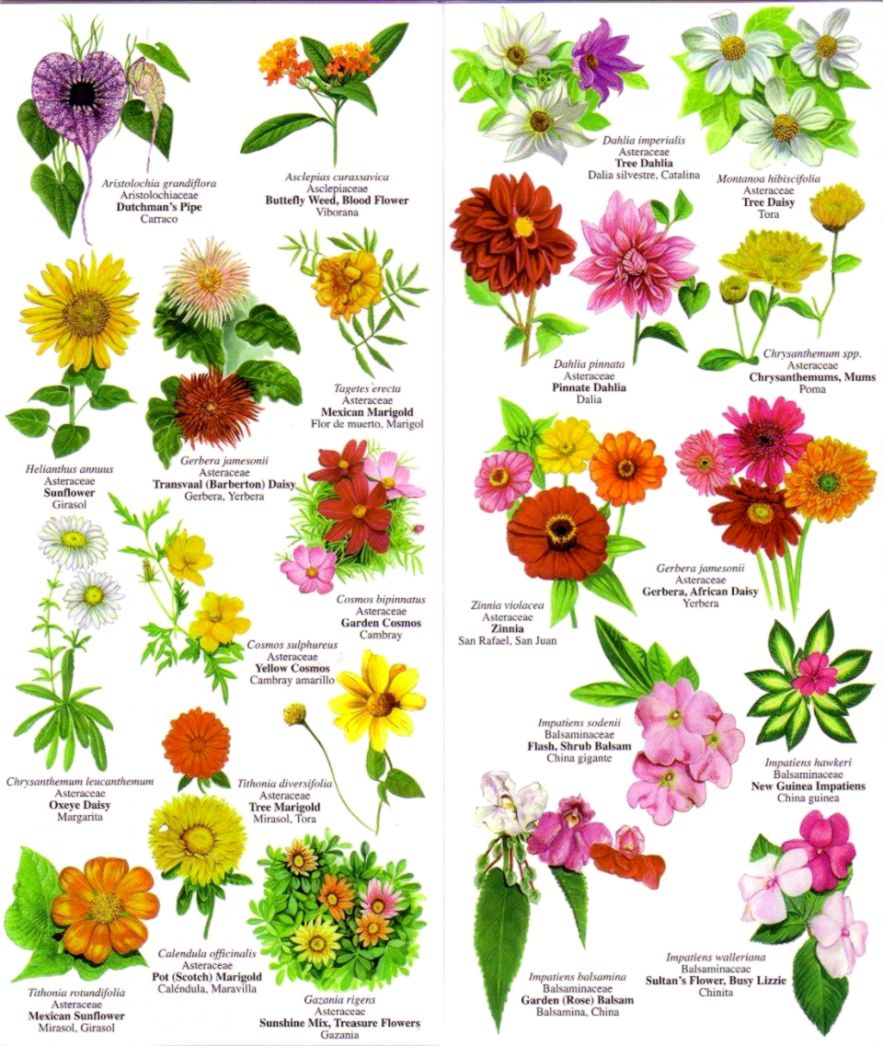 Flower Names Wallpapers Engine