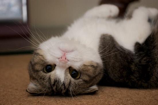 kucing paling cantik