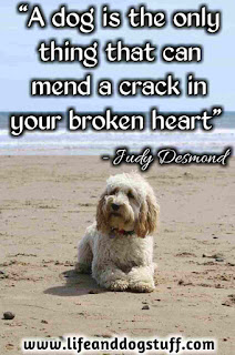Beautiful Dog Quotes and Sayings