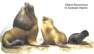 León marino sudamericano Otaria flavescens