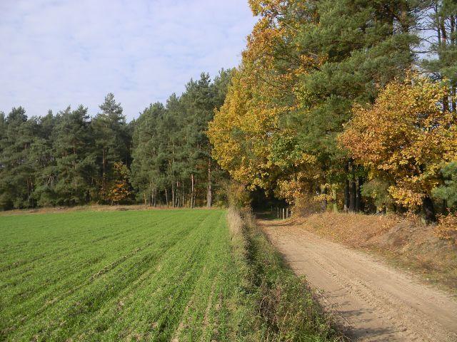 jesień, pola, las, liście