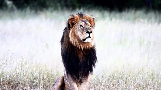 CECIL, The Lion