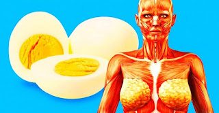 2 Eggs A Day