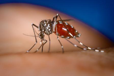 Chikungunya and Homeopathy treatment