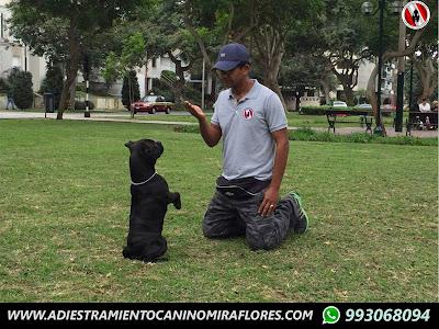 Adiestramieto Canino Lima