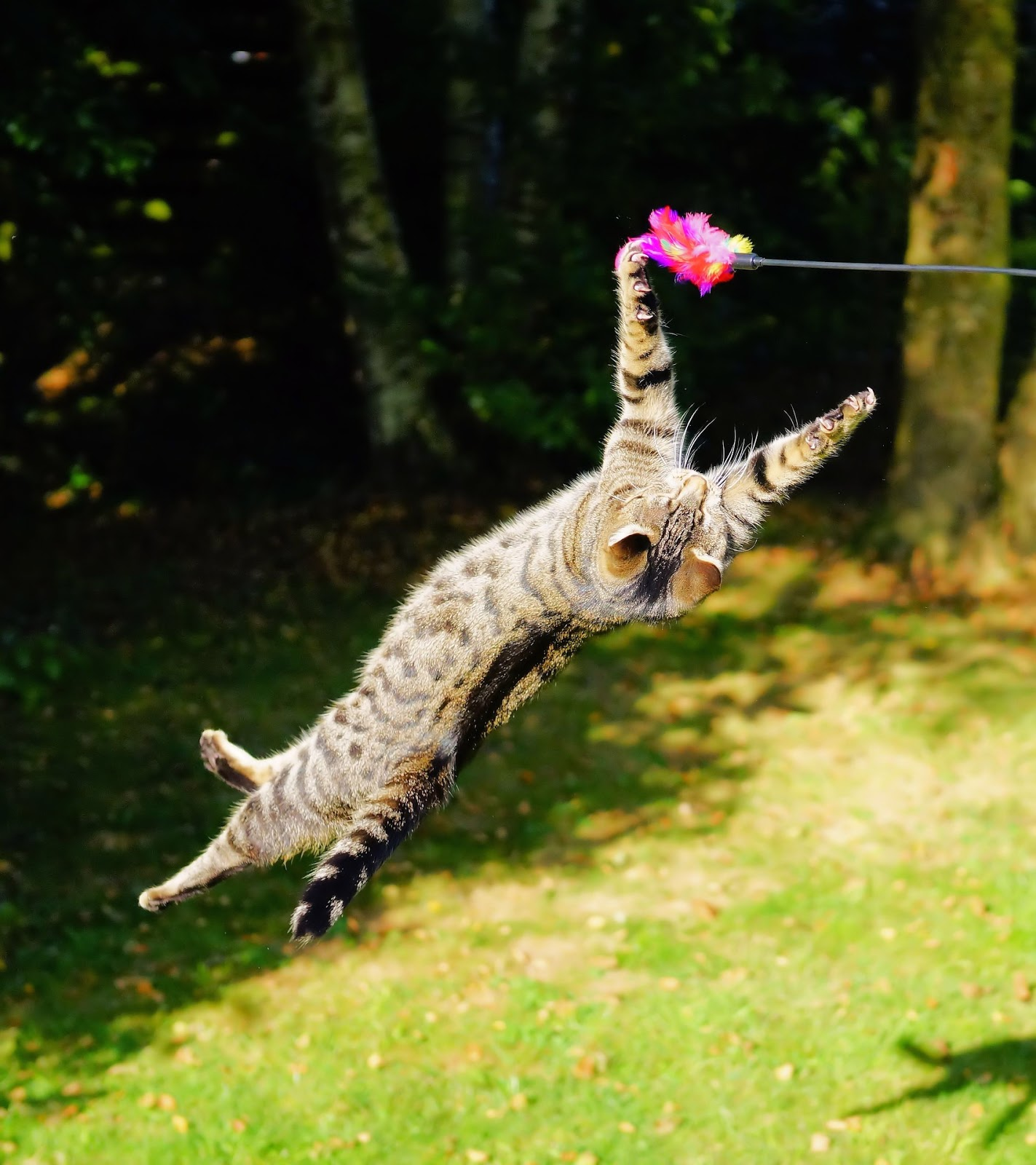 Cat: Pets Behaving Badly: Solutions With Dr Kate: Environmental