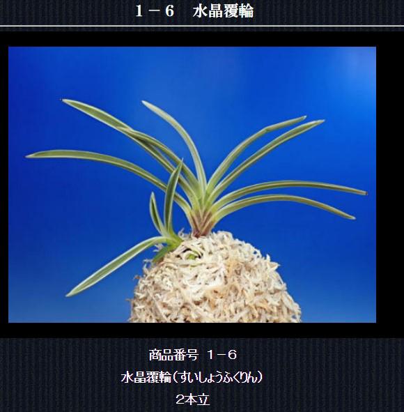 http://www.fuuran.jp/1-6html