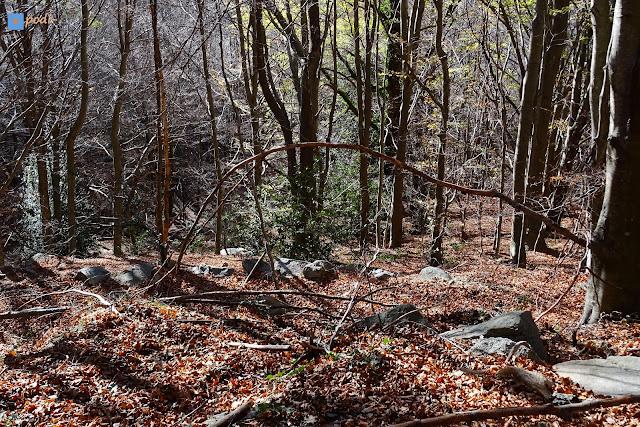 otoño bosque montseny