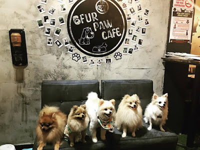 New Dog cafes in Singapore