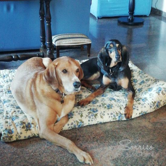 sorrisoa365giorni curare gli affetti cani