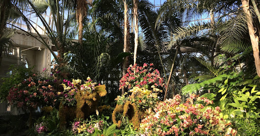Rare & Exotic Orchids Dazzle at New York Botanical Garden's Annual Orchid Show - Homage to Thailand Orchid & Tropical Plant Culture
