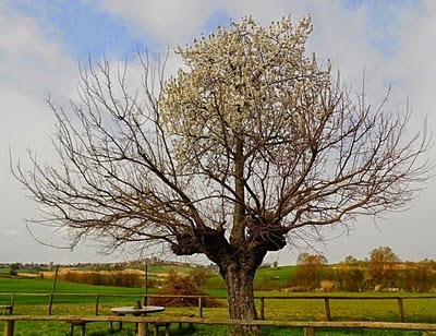 Pohon yang Tumbuh Diatas Pohon Pohon yang Tumbuh Diatas Pohon 35687 1286447612277 8287323 n