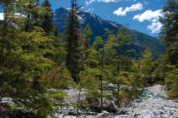 Forests in Patagonia