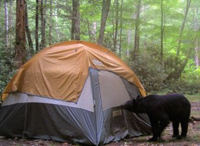 G Bear Tent by a bear whose attention