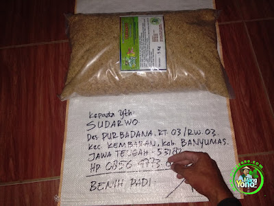 Benih Padi TRISAKTI Pesanan SUDARWO Banyumas, Jateng.  (Sebelum di Packing)
