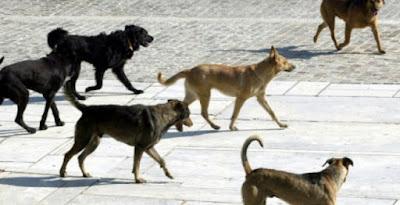 Απάντηση του Φιλοζωικού Σωματείου, στα καταγγελλόμενα Επαγγελματία για τα αδέσποτα στα Σύβοτα