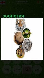 зоология показана в картинках с изображением разных зверей