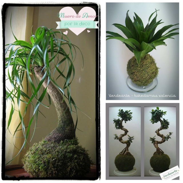 feng shui decoración elemento madera plantas