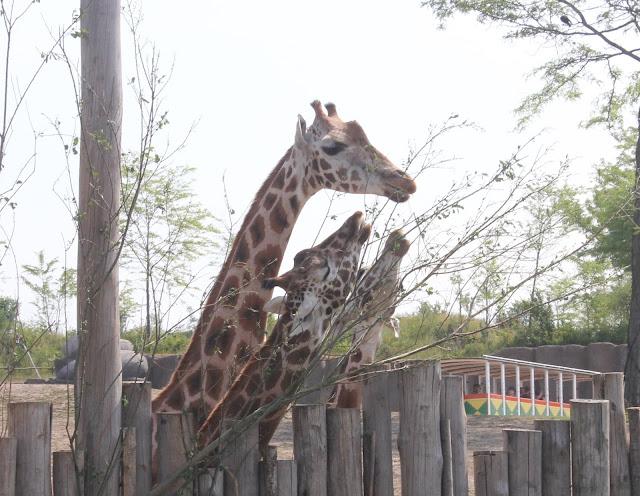 IMG 3852 - Wildlands Adventure Zoo Emmen